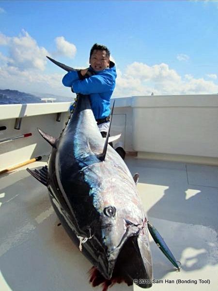 The Forgotten Bluefin