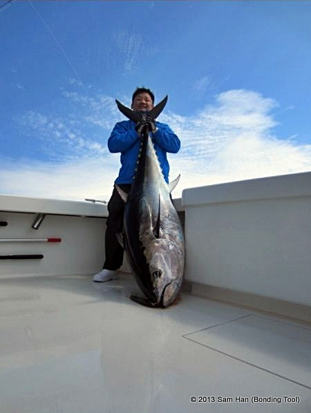 This 100+kg bluefin tuna is the one that was brought home for the freshest sashimi anyone could eat!
