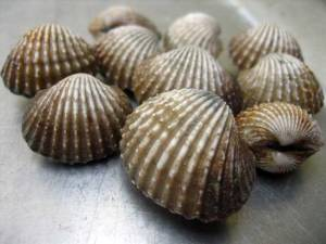 Cockles. Photo credit: Google Images