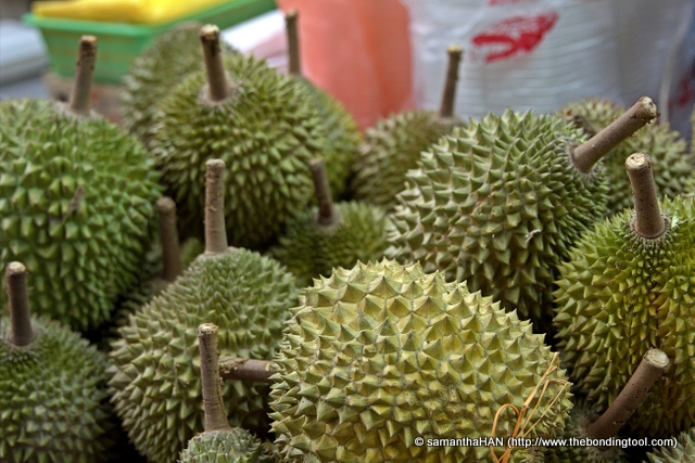 Durians  are distinctive for its large size, strong smell, and formidable thorn-covered husks.