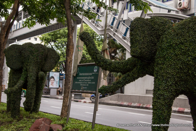 Anyone who's been to Thailand will agree that elephants are a huge part of Thai culture. It is the symbol of the nation. Thai elephants are members of the Indian subspecies, even though they may be considered a separate race with distinct differences.