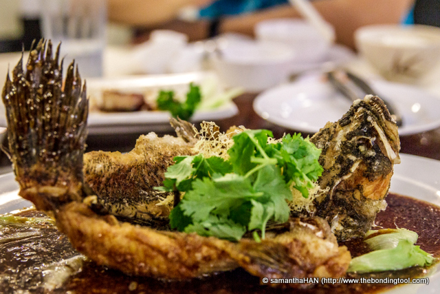 The Marble Goby (soon hock) is the biggest species of gobies and is one of the best tasting freshwater fishes, often served in restaurants. They either steamed or deep-fried as shown here. The texture of the meat is super fine and tender.
