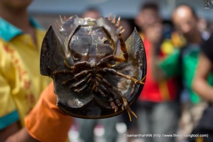 At the Kelong, a young boy of 15 years old seemed very knowledgeable in his trade and marine life.