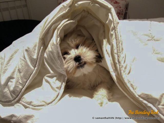 Bam under sheets.