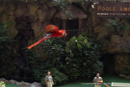 Jurong Bird Park-0021