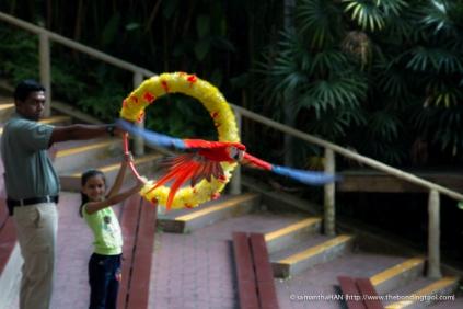Jurong Bird Park-0034