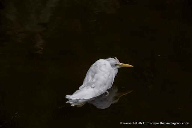 Jurong Bird Park-0280