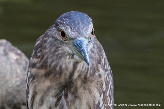 Jurong Bird Park-0281