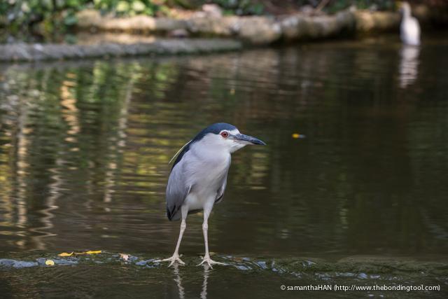 Jurong Bird Park-0297
