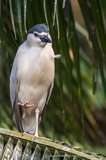 Jurong Bird Park-0321