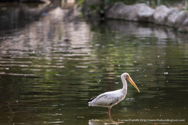 Jurong Bird Park-0365