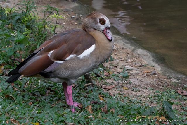 Jurong Bird Park-0428