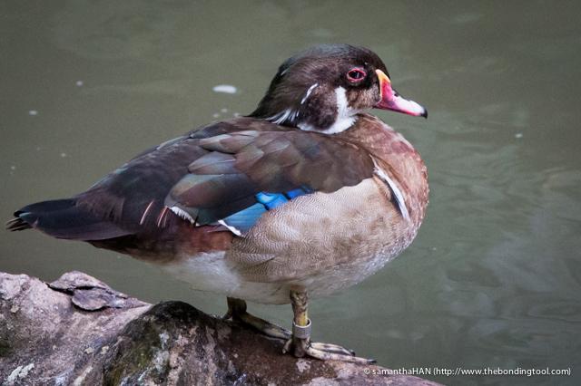 Jurong Bird Park-0438