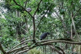 Jurong Bird Park-0496