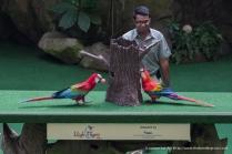 Jurong Bird Park-9963