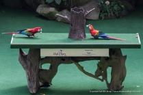 Jurong Bird Park-9964
