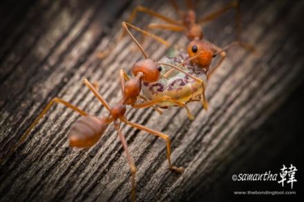 Macro Ants Feeding @ PRP