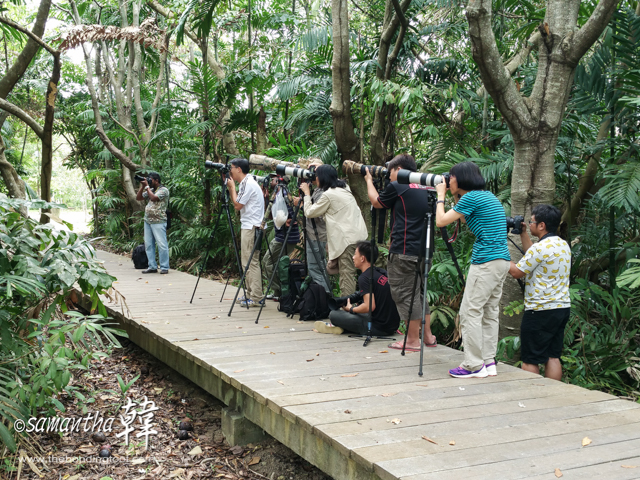 Birding at Pasir Ris Park.